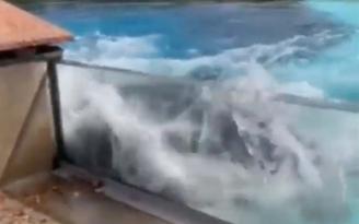 44 yıldır su tankında yaşayan 5 yavrusu ölen arkadaşsız kalan balina Kiska başını vura vura intihara kalkıştı